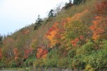 peak fall foliage around 1400-1500m