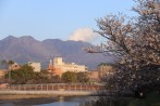 Sakurajima in the distance