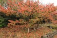fall foliage in Goshiki-dai