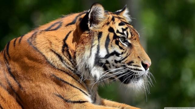 Madhai wildlife