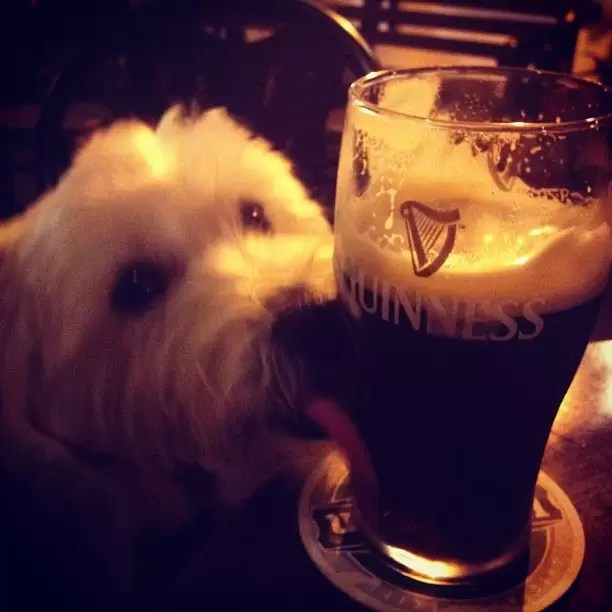 cocoguiness