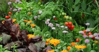 flores que afastam animais