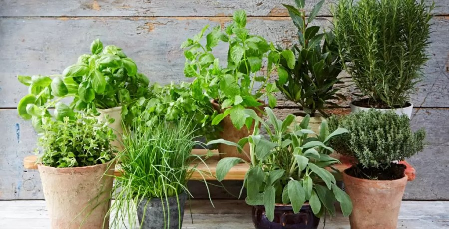 featured_herbguide-1024x683