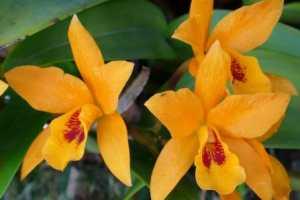Orchidées du jardin exotique de Cosy Home Rennes
