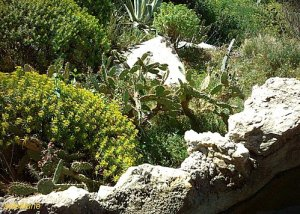 Sol pierres plantes grasses