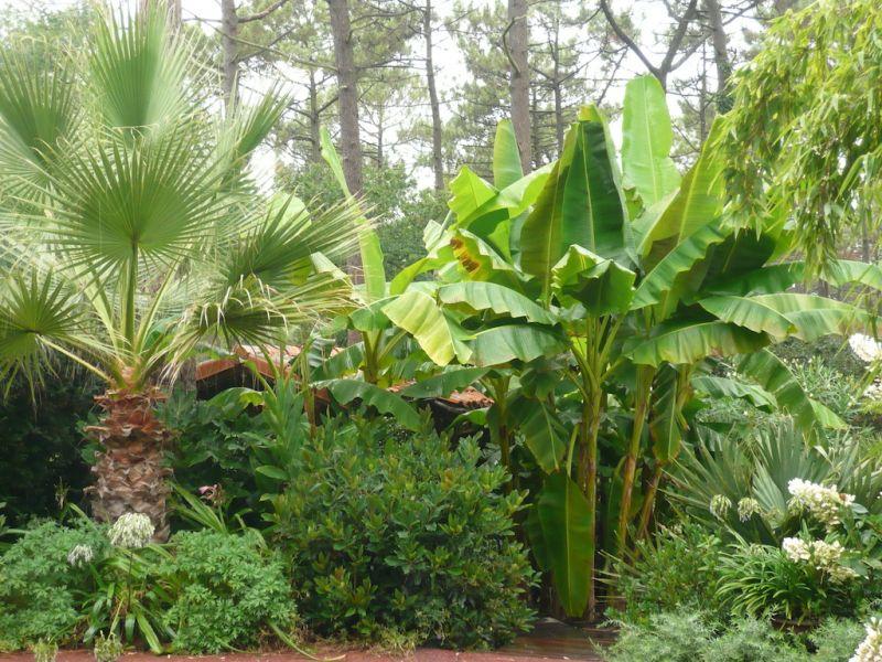 Crer Un Jardin Exotique Chez Vous Jardin Exotique De
