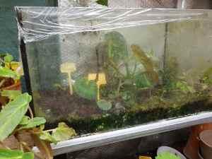 Bégonias terrarium rennes