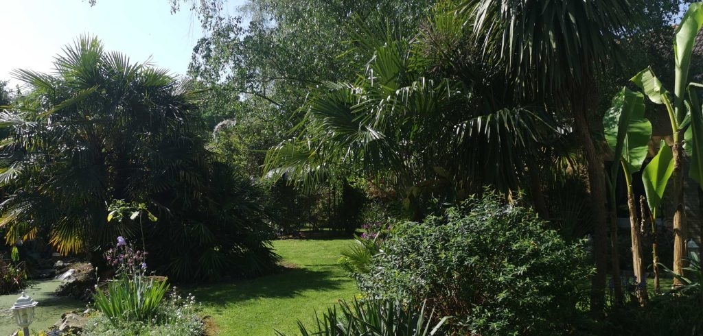 Jardin-exotique-de-cosy-home-rennes-8
