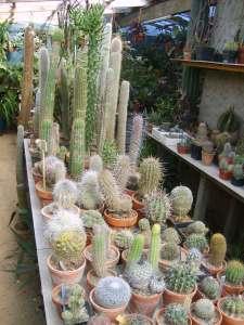 cactus jardin exotique de cosy home