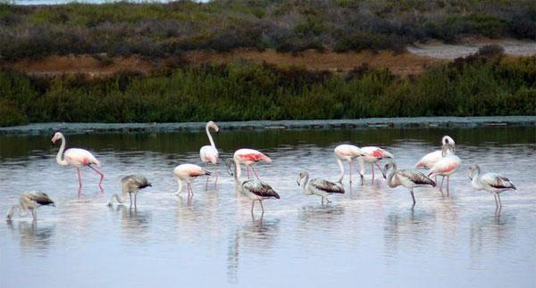 Resultado de imagen de El Parque Natural de Ses Salines ibiza