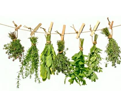 """Résultat de recherche d'images pour """"image de plante aromatique"""""""