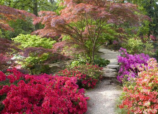 jardin japonais arbres plantes et