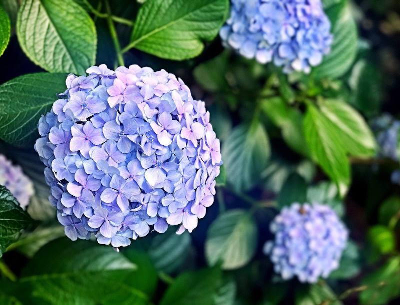10 fleurs d ete pour un massif fleuri