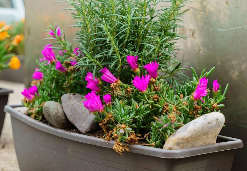 fleurs pour jardiniere de printemps