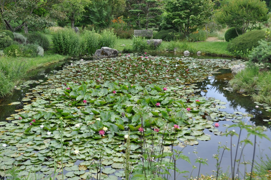 Faire Un Jardin Fleuri Perfect Ensuite Pour Les Attirer