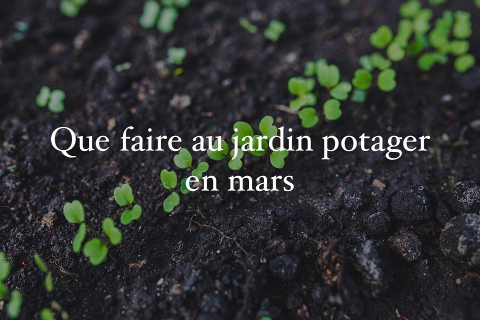 Que Faire Au Jardin En Mars Calendrier Du Jardinier