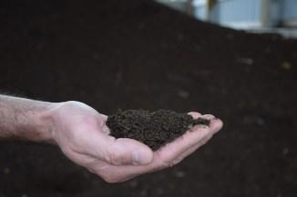 compost mature