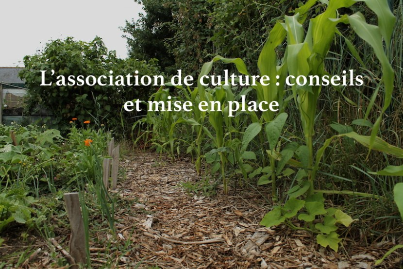 association de culture jardin potager milpa