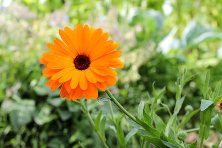 Que faire au jardin potager en septembre jardiner fut - Que faire au jardin en septembre ...