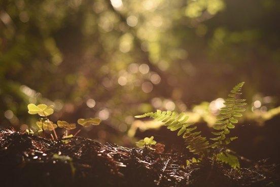 forêt le sol, la terre et les champs