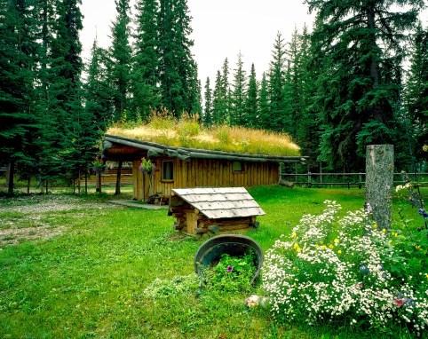 exemple de toit végétalisé