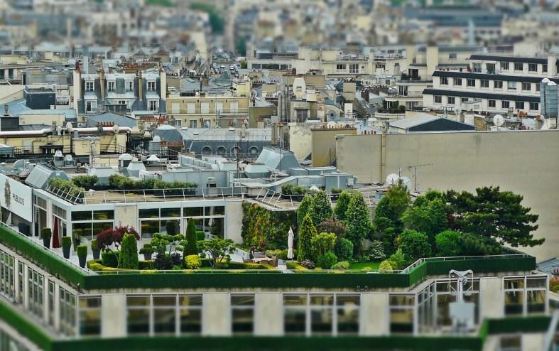 Un jardin de toiture
