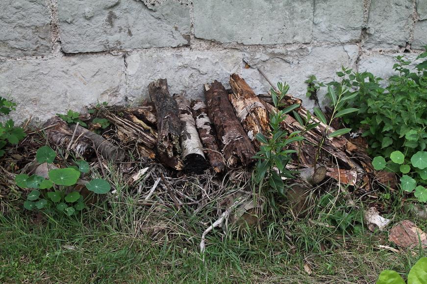 tas de bois avec de la capucine - biodiversité