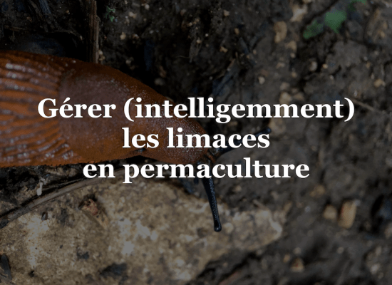 Gérer limaces permaculture