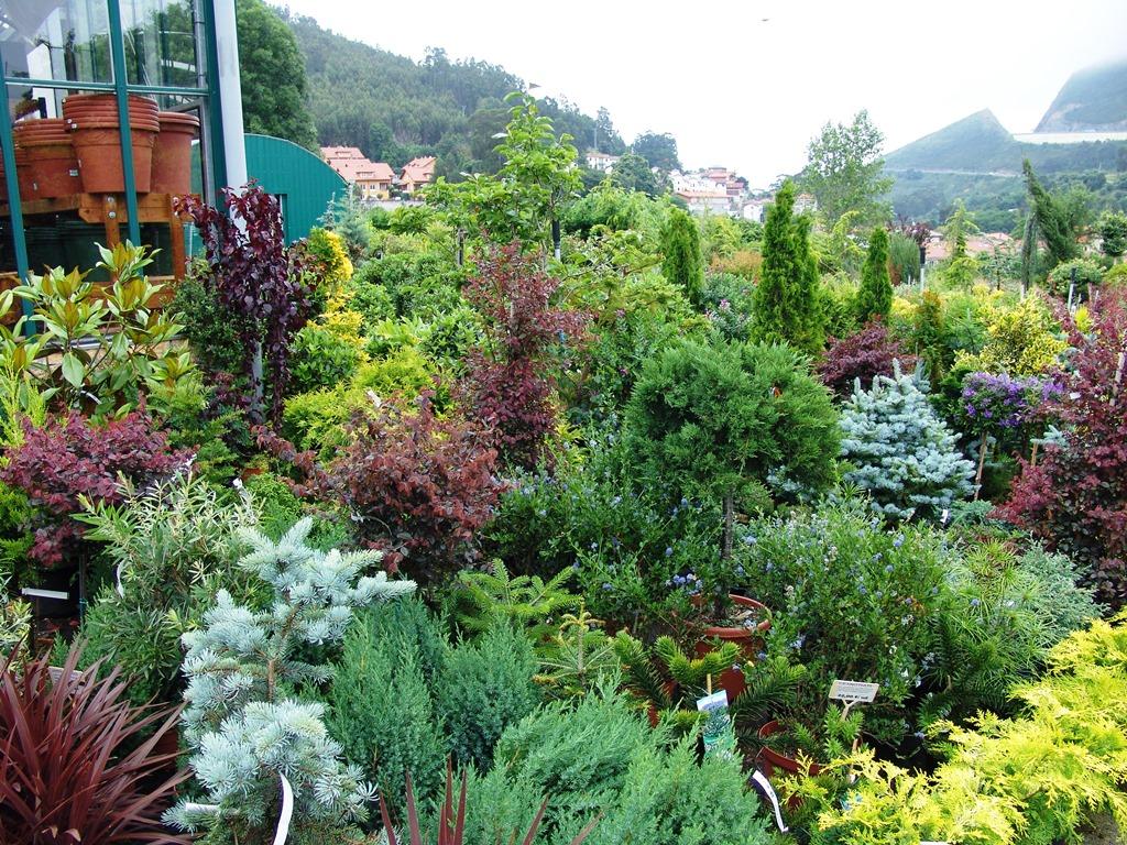 Arbustos centro de jardineria el roble castro urdiales for Centro de jardineria