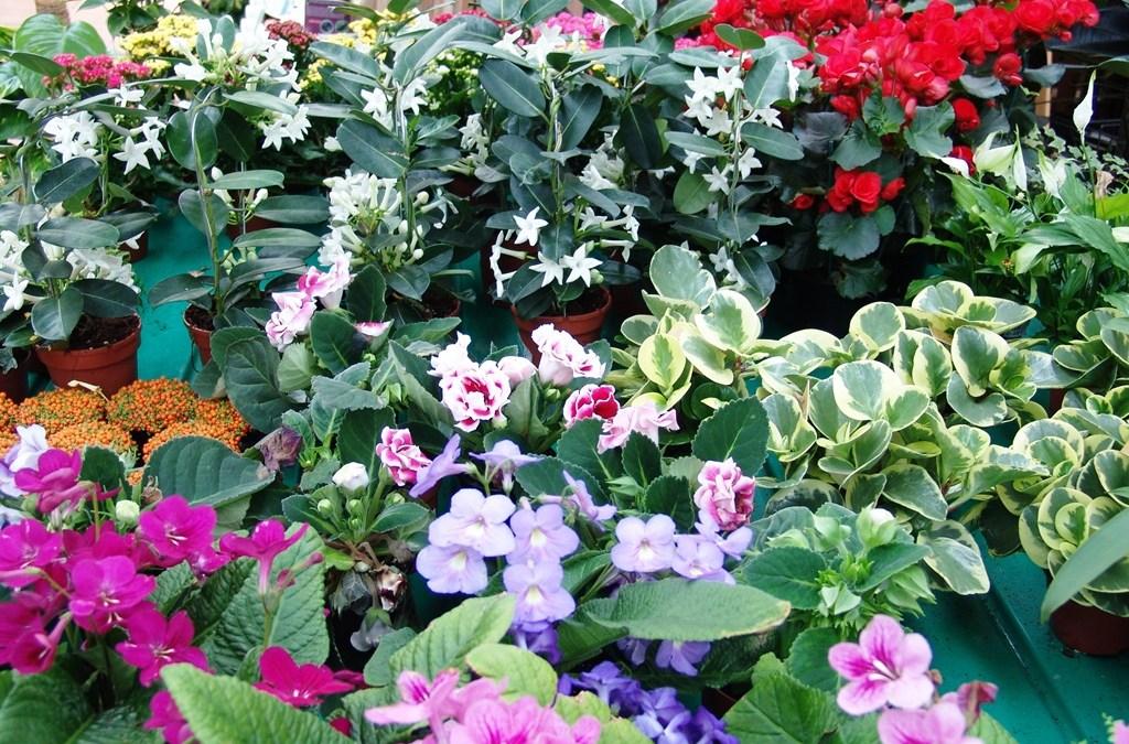 Nuestras Plantas de Interior