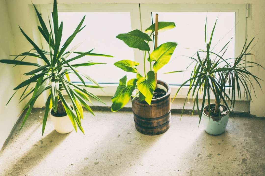 Indoor plant compositions don't usually work