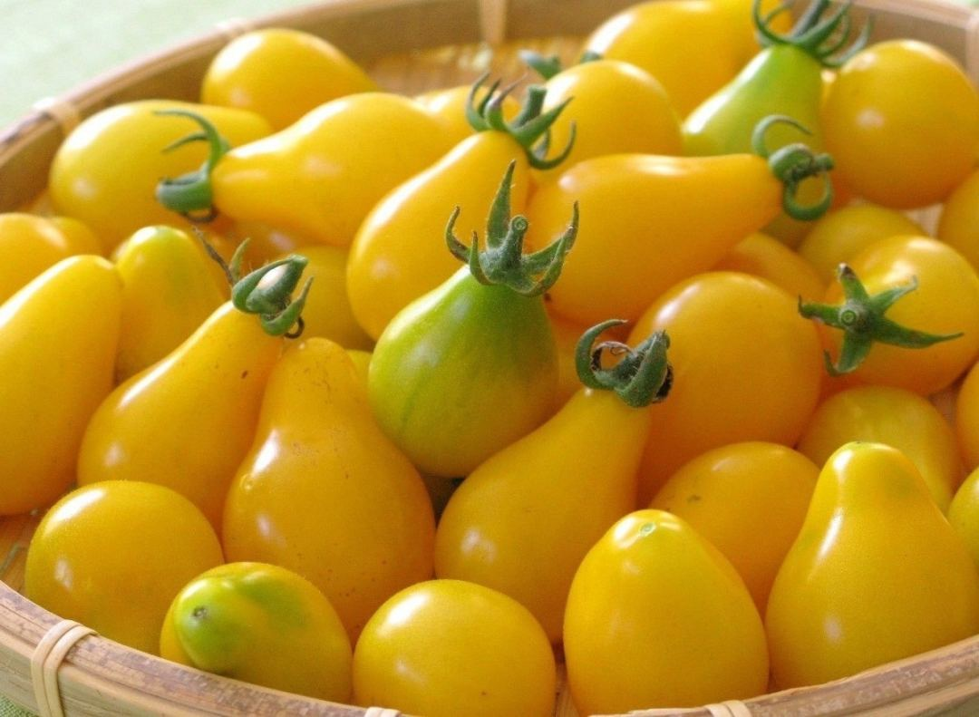 yellow pear tomato on a tray