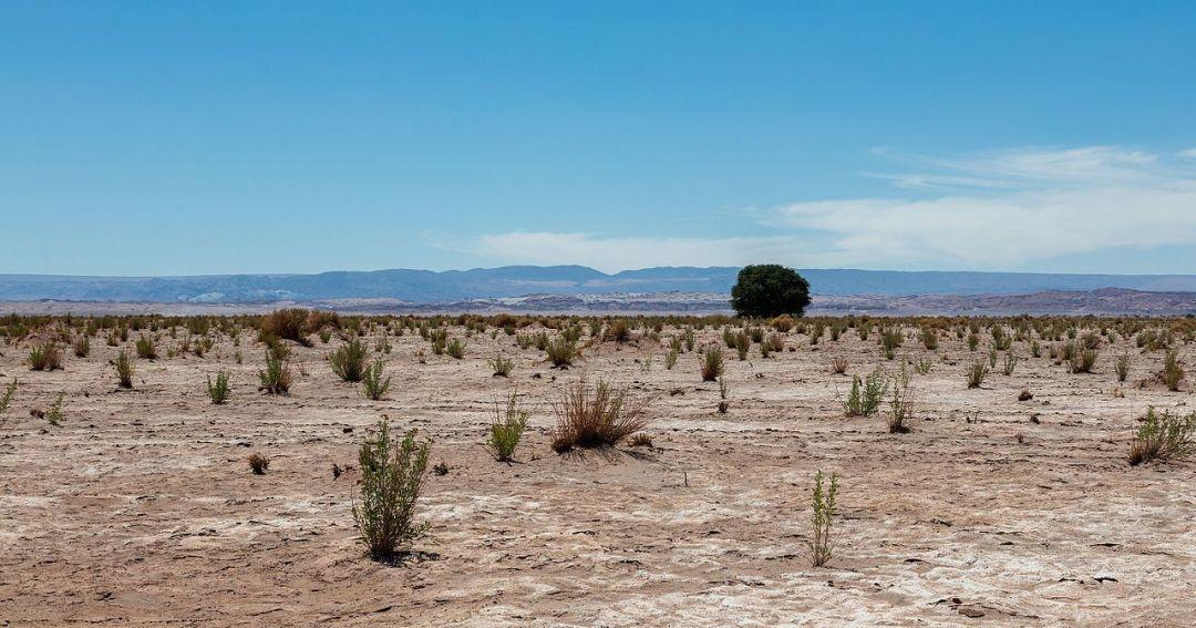 There is little vegetation in the desert