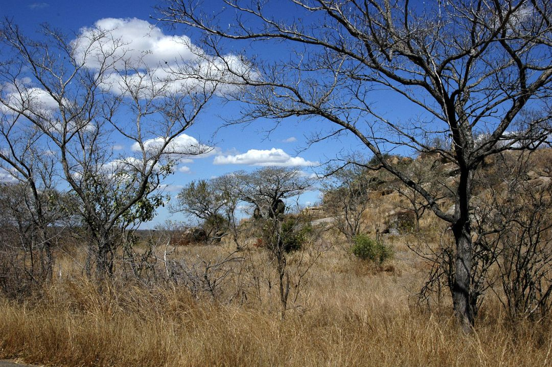 The wooded savanna are landscapes where generally deciduous trees inhabit