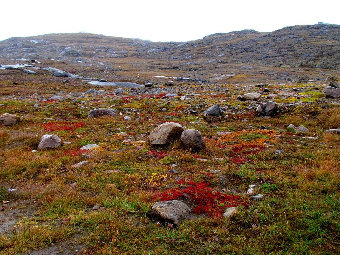 The tundra has low-growing plants