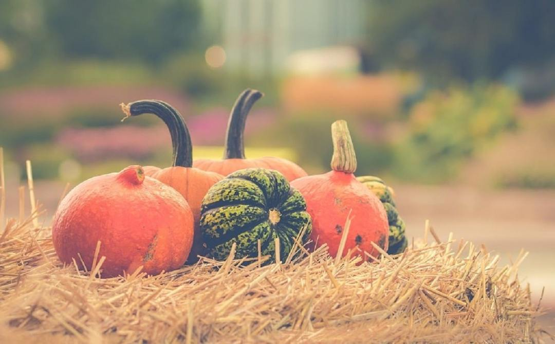 various types of pumpkins resting on top of straw