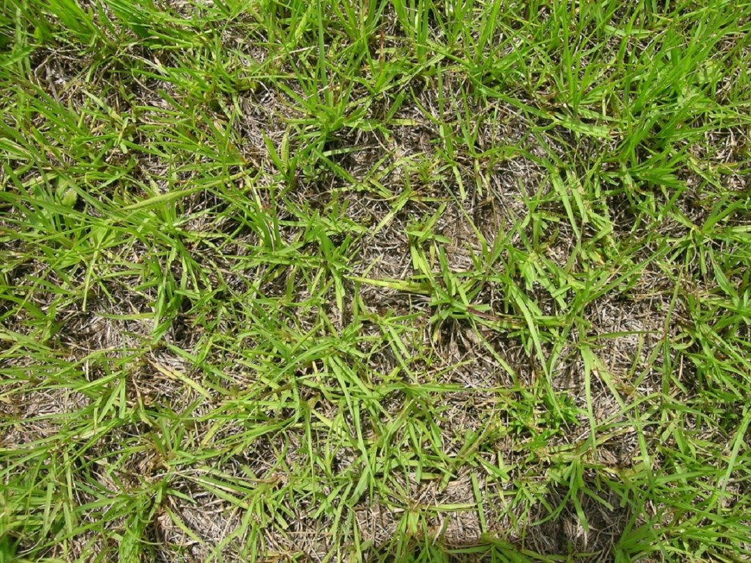 grass to recover degraded soils