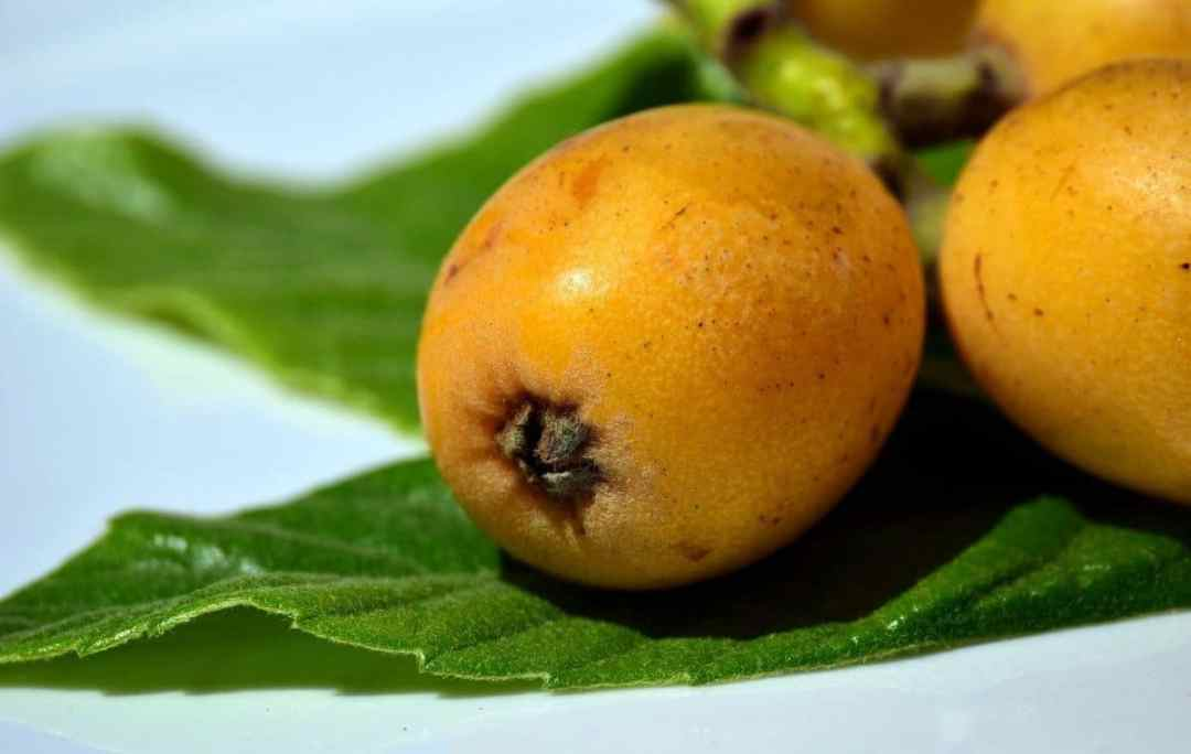 Loquats are edible fruits