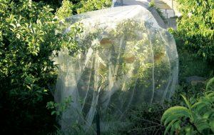 filet de protection pour arbre   carpocapse