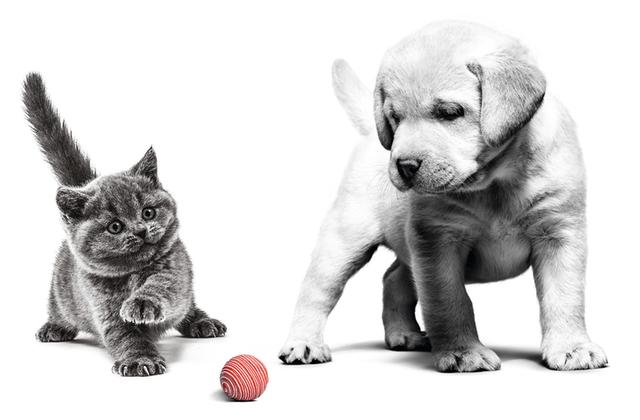 royal canin chien et chat