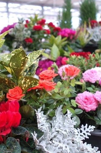 jardinerie floravie jardinerie animalerie decoration vaucluse 84 a valreas