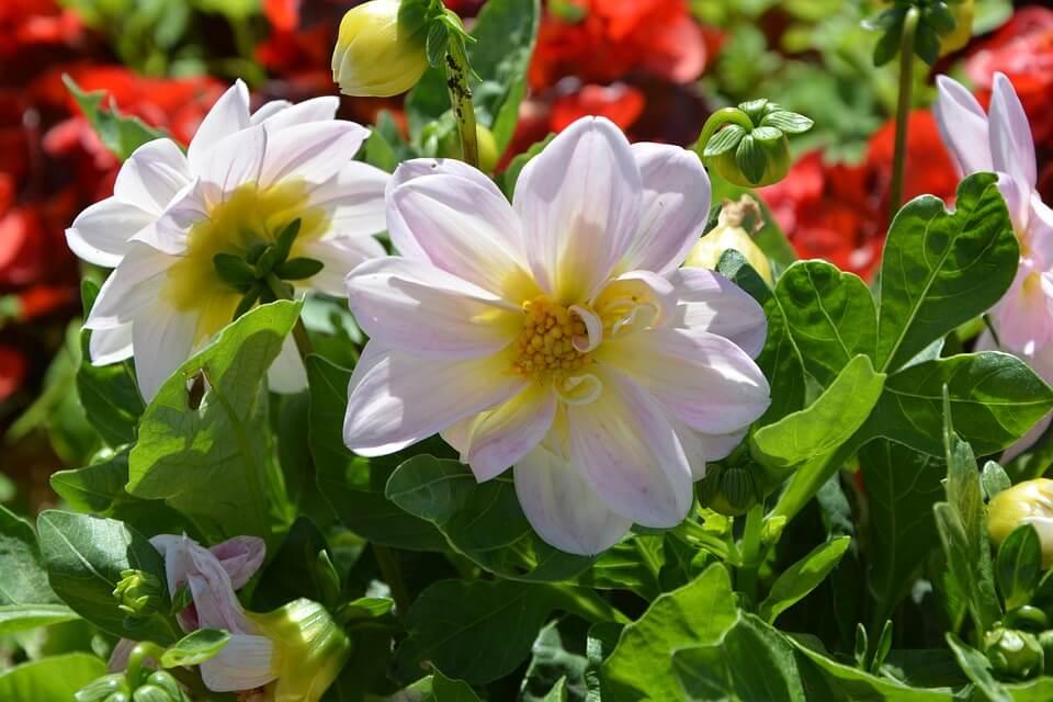 comment reussir votre massif de fleurs