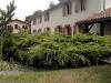 Juniperus x pfitzeriana \'Old Gold\'