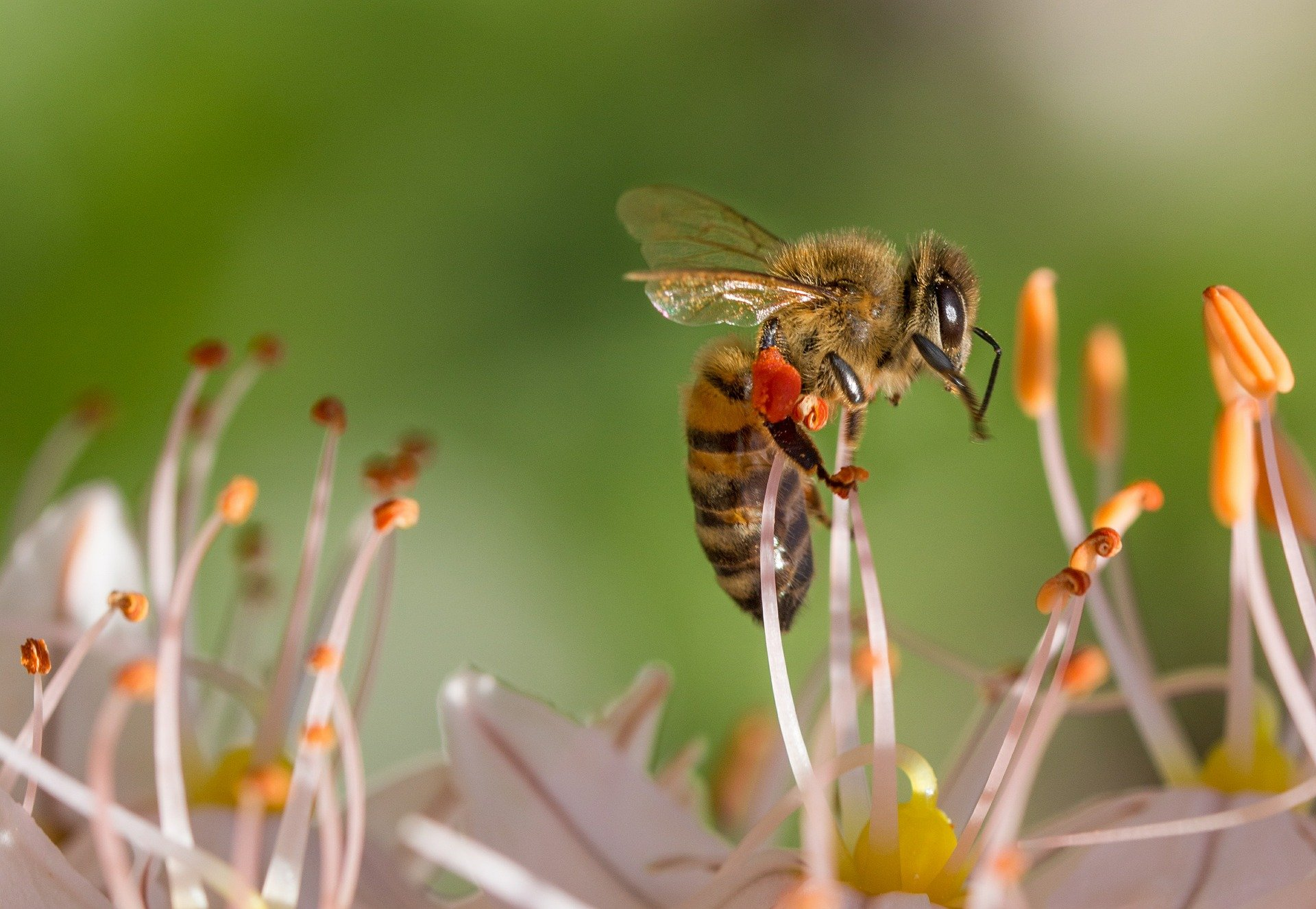 Allogamie ou pollinisation croisée