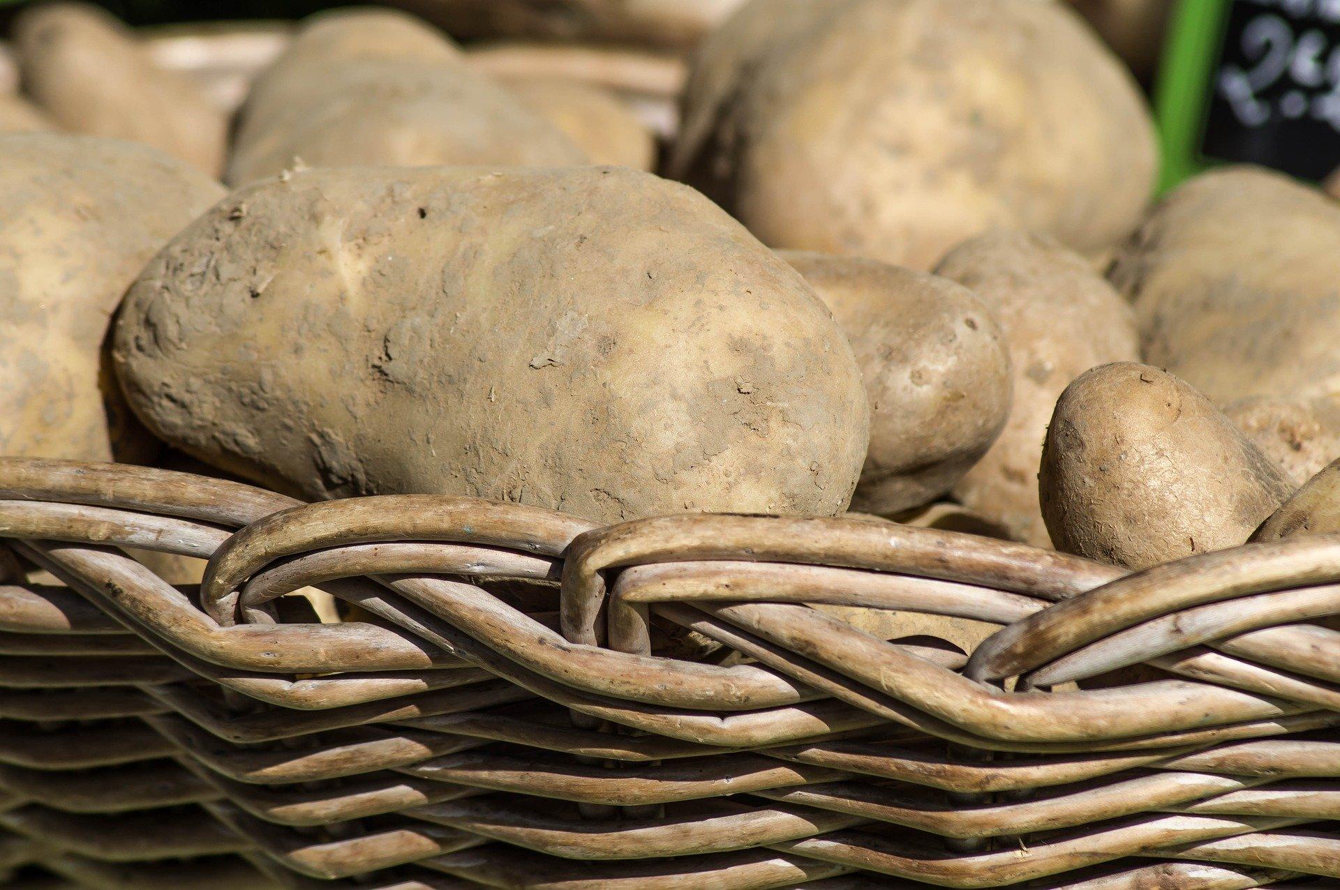 Notre sélection de pommes de terre