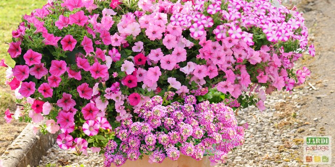 5 compositions pour une jardiniere