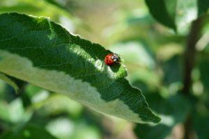 Produits bio et  traitements naturels