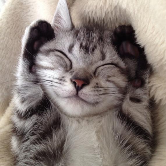 """Résultat de recherche d'images pour """"chat content"""""""