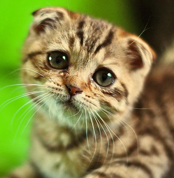 """Résultat de recherche d'images pour """"chat triste"""""""