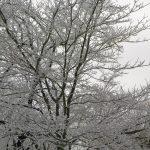 ice_storm-01-07-2009-1